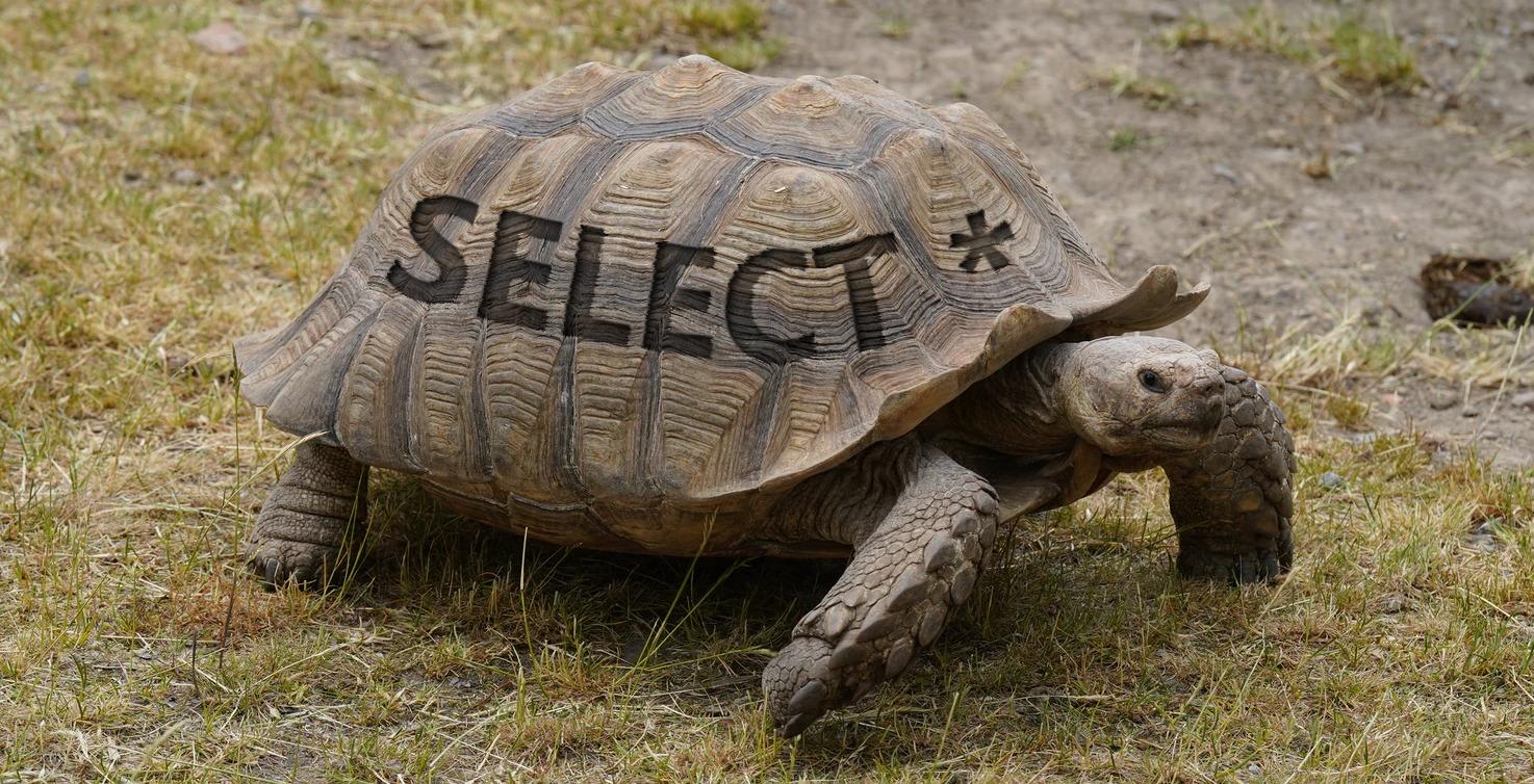 Slow SQL